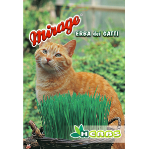Erba dei gatti archivi semitalia snc terni umbria for Erba per gatti