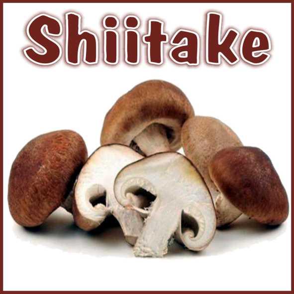 Kit per produzione in casa di funghi Shiitake