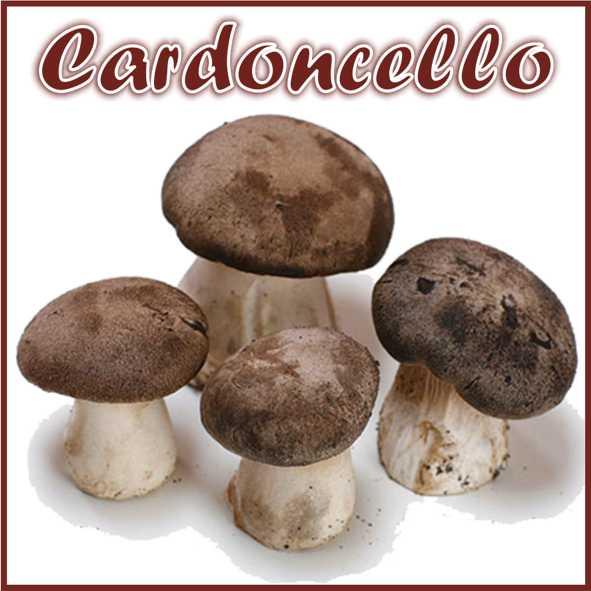 Kit per produzione in casa di funghi Cardoncelli